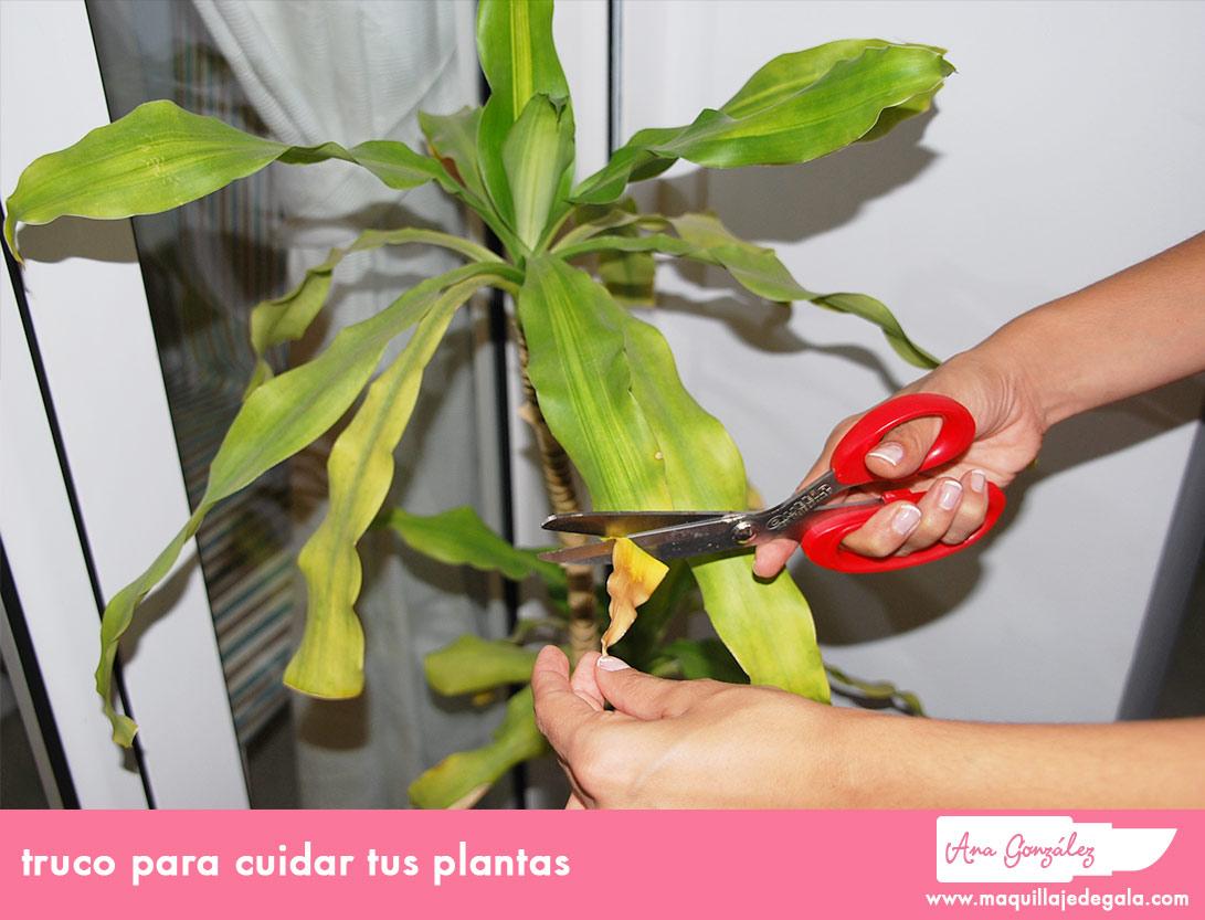 truco_para_cuidar_tus_plantas (1)