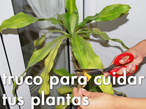 Truco para cuidar tus plantas
